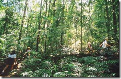 233 Floresta da Tijuca