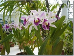 elisa-jardim-botanico-2-2007-350-px
