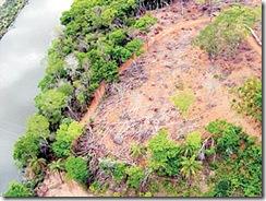 Desmatamento-florestal2---2