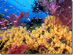 recife-de-corais_1976_1600x1200