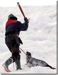 spotty-seal
